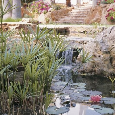 Todo lo que debes saber para construir un estanque artificial en