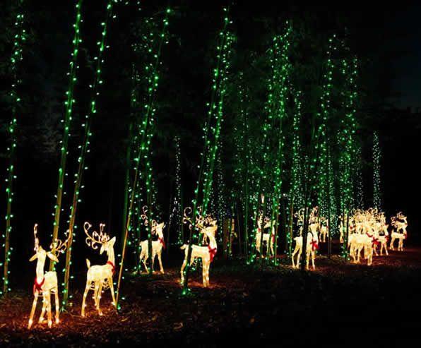 Holiday Lights Coastal Georgia Botanical Gardens At The Historic