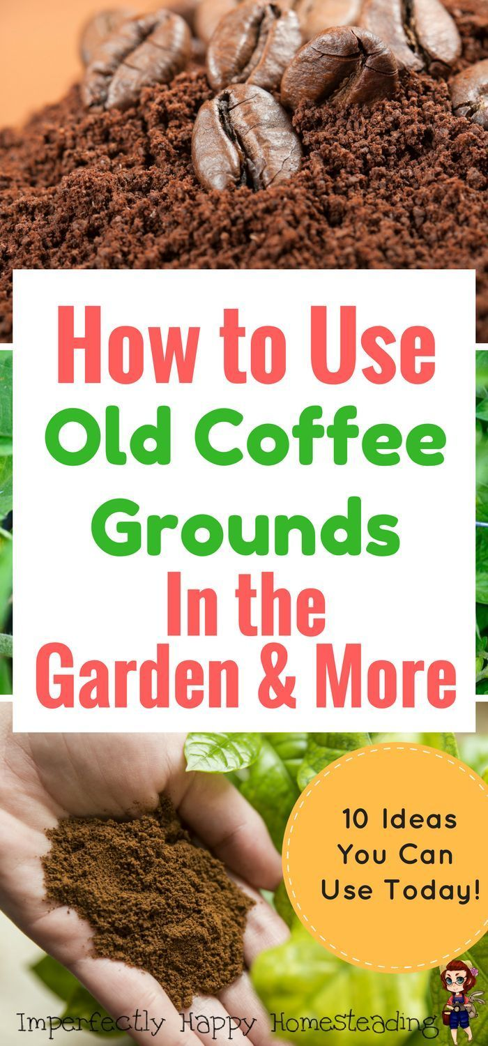 How To Use Old Coffee Grounds In The Garden U0026 More. Great For Gardeners,
