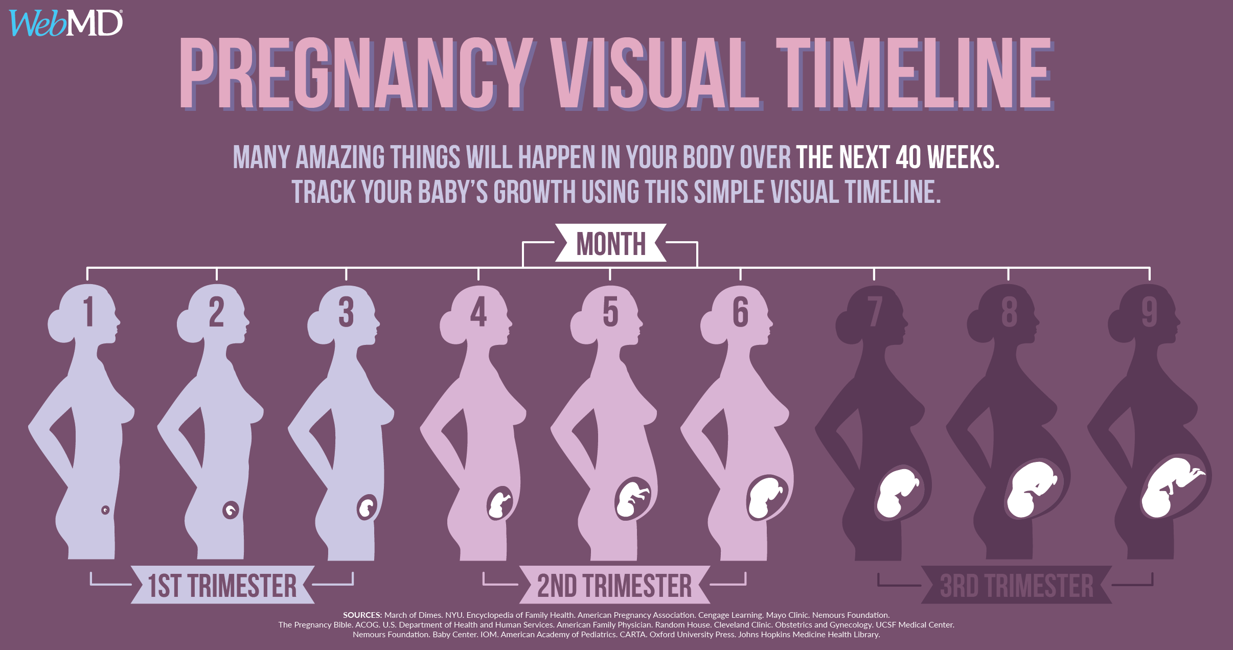 Pregnancy Timeline: Fetal Development Week-by-Week with