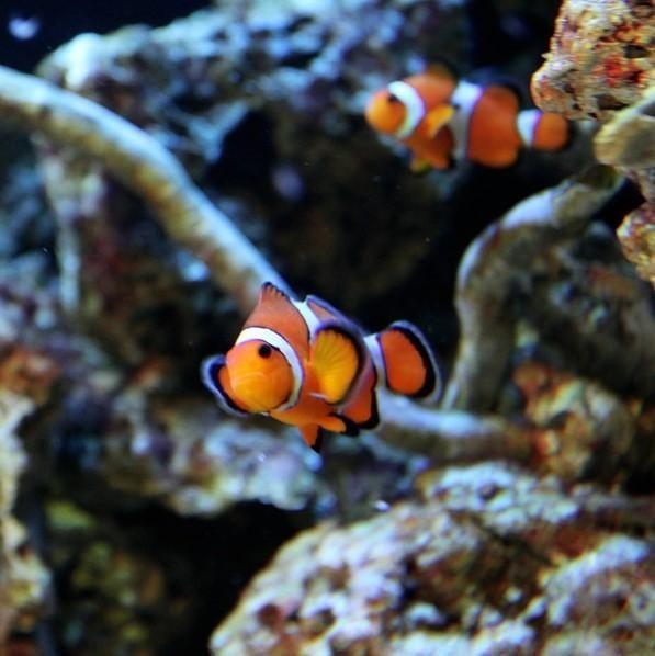 Peces tropicales para un acuario lydia baby pinterest for Comida para peces tropicales acuario