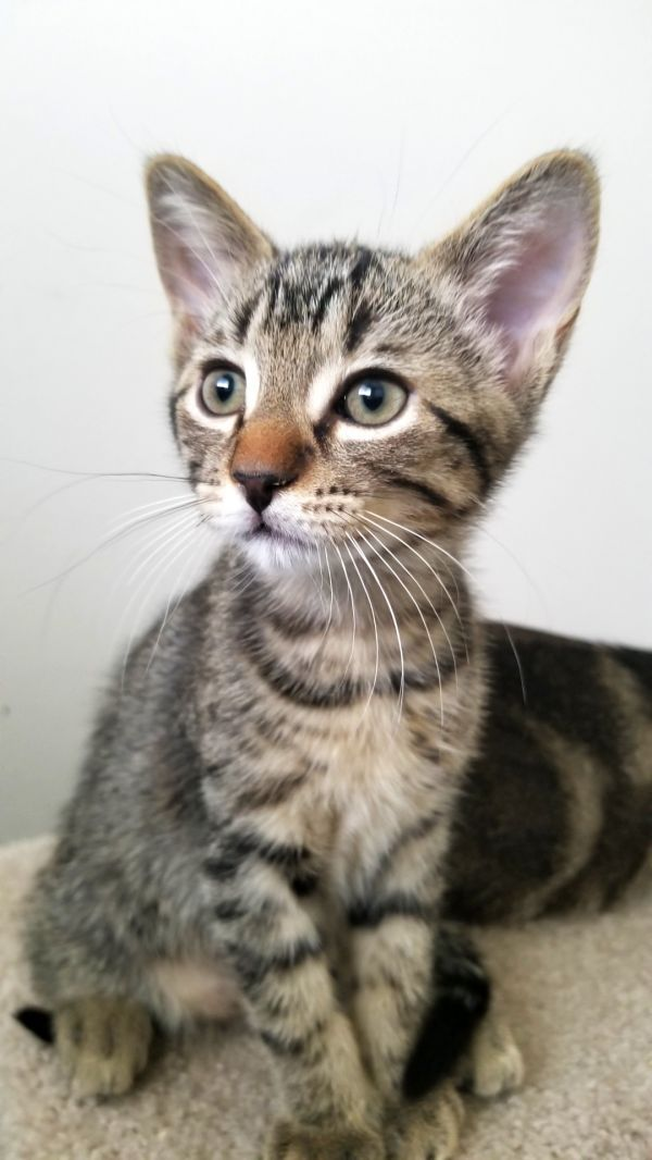 Pets For Adoption Near Edmonton Ab Petfinder Saving Cat Pet