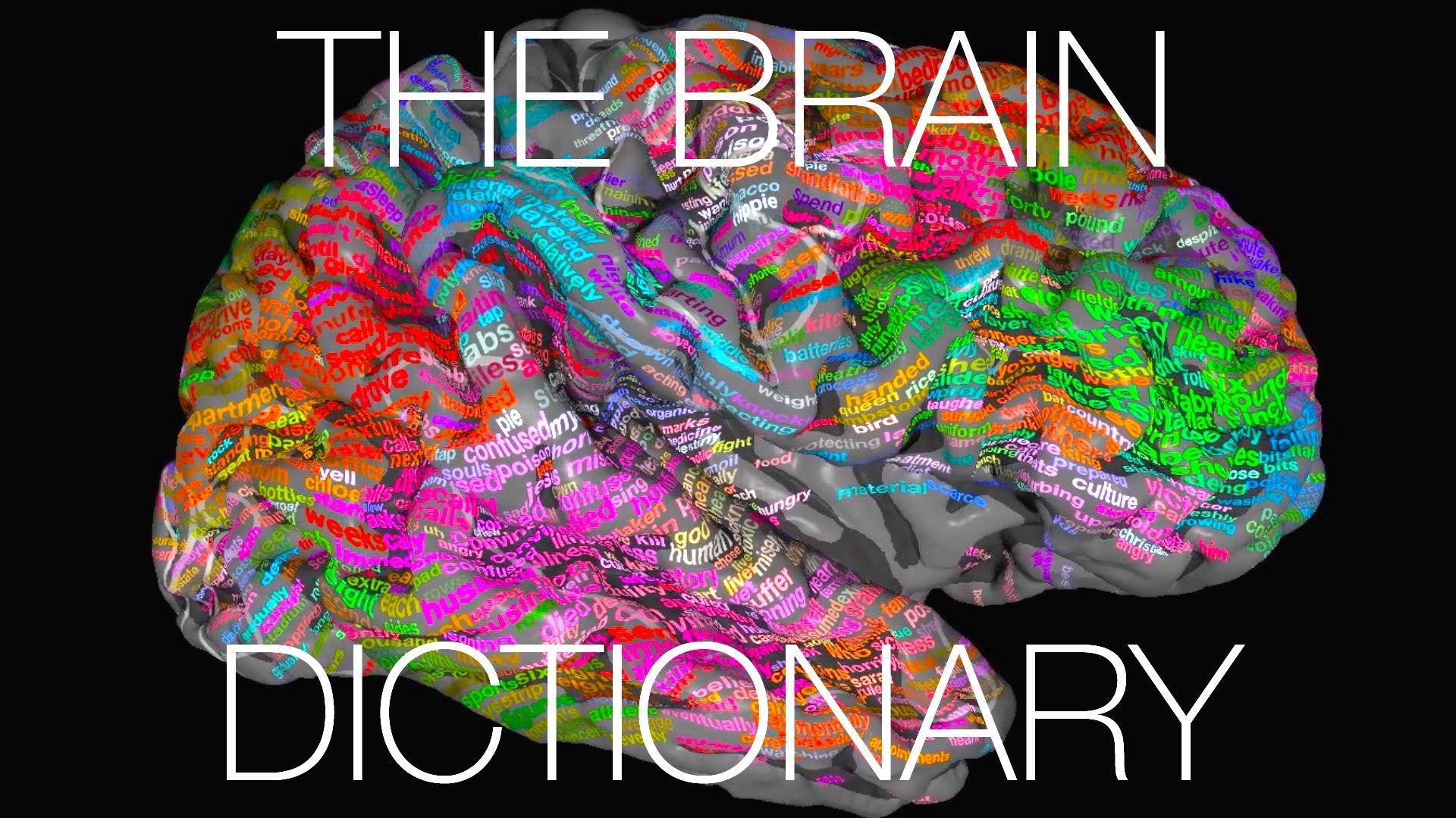 The brain dictionary   Ciencia - Tecnologia - Salud   Pinterest ...