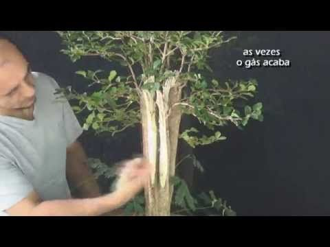 Fênix (vídeo 4) - YouTube