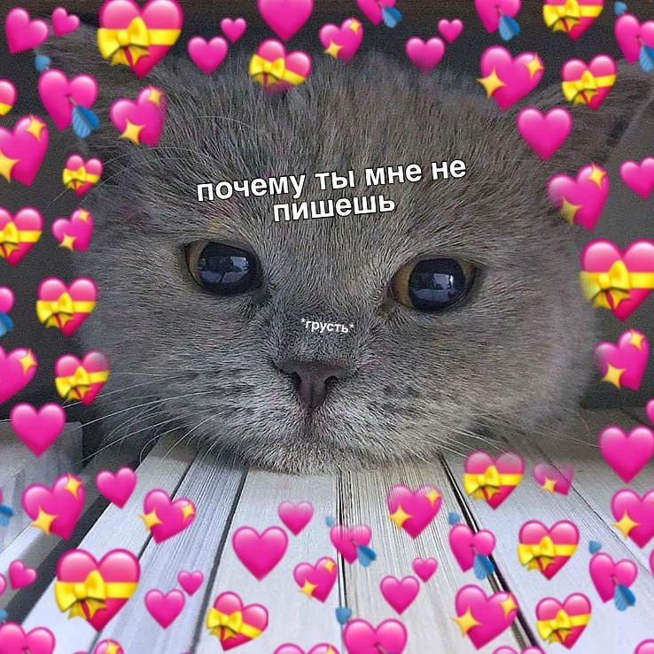 картинки с котиками милыми с надписью