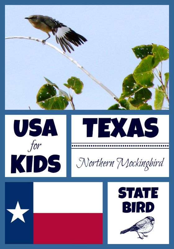 Texas State Bird Coloring Pages And Activity Sheets