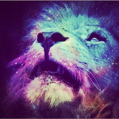 galaxy lion | Galaxy Lion Tumblr Colorful, galaxy, lion ...