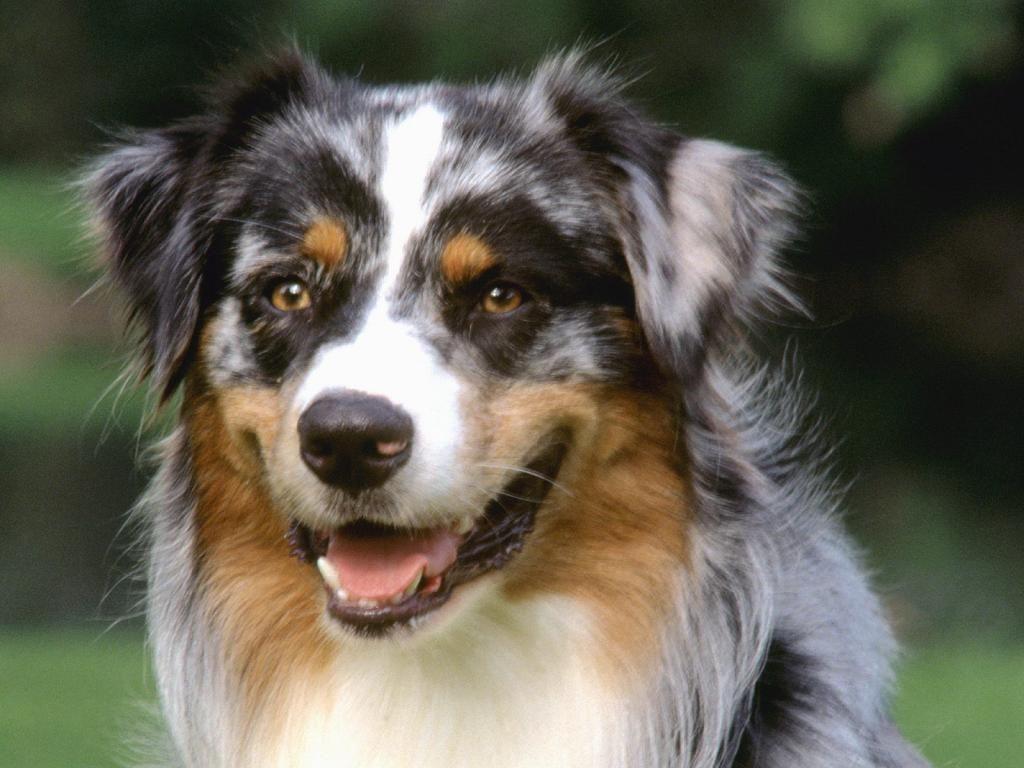 Koirat - taustakuvia ilmaiseksi: http://wallpapic-fi.com/elaimet/koirat/wallpaper-33144