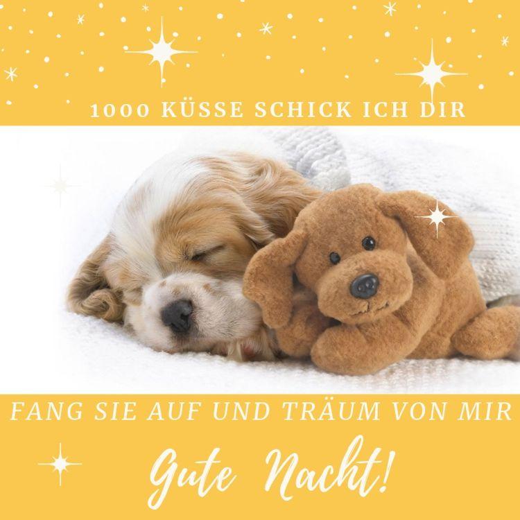Gute Nacht Bilder Whatsapp Hund Kusse Gute Nacht Bilder Gute Nacht Bilder Witzig Gute Nacht Spruche