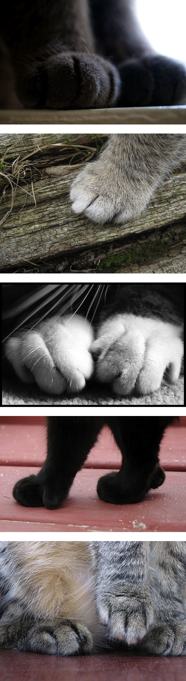 Velvety Paws! Lots of them! The best bit of the kitty, the