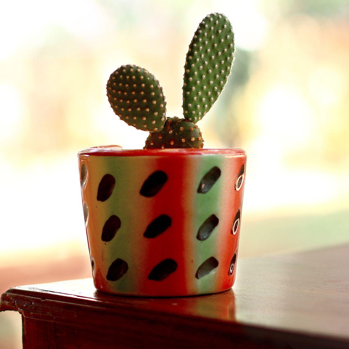 Gardenia Ceramic Melon Pot- Original Look - 4 Inches | Gardenias and ...