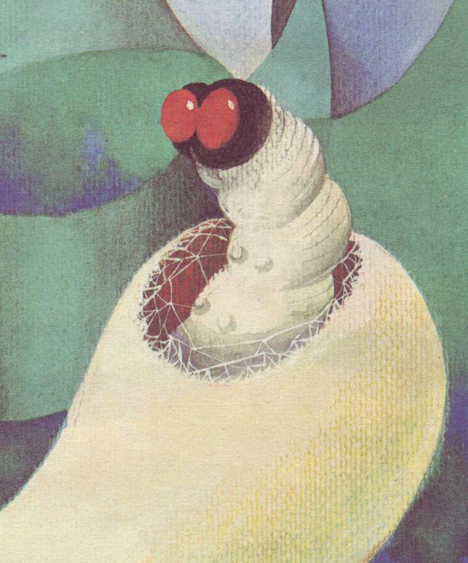 a silk worm