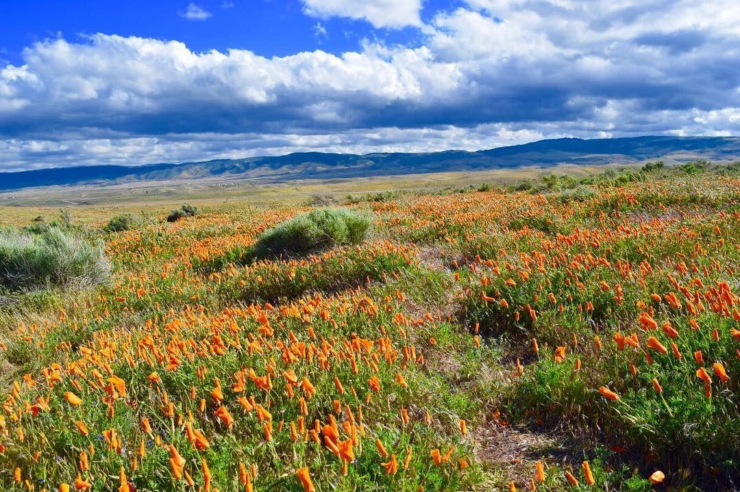 Apr. 11, 2017 Antelope Valley Poppy Reserve by tortoiselove #poppyreserve