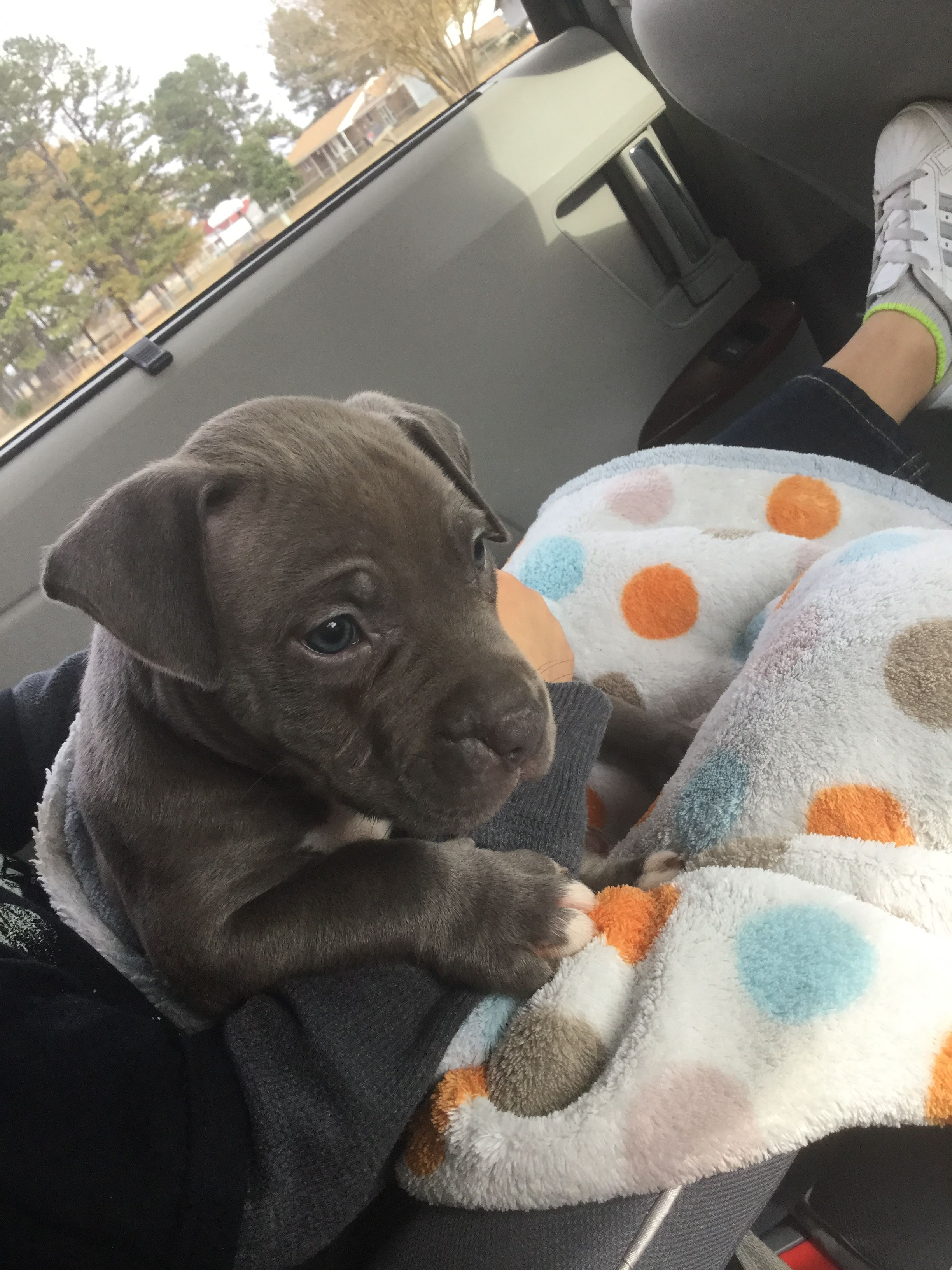 Time To Pick Up Our New Baby Blue Will Love His New Family Blue
