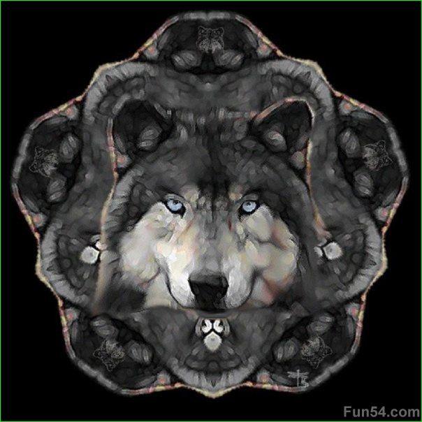 Wild Wolves   wild wolves photos wild wolves photos