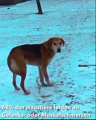 Pin Von Buddy Auf Dog Video In 2020 Mit Videos Haustiere Gif Lustig Tiere Haustierbetten