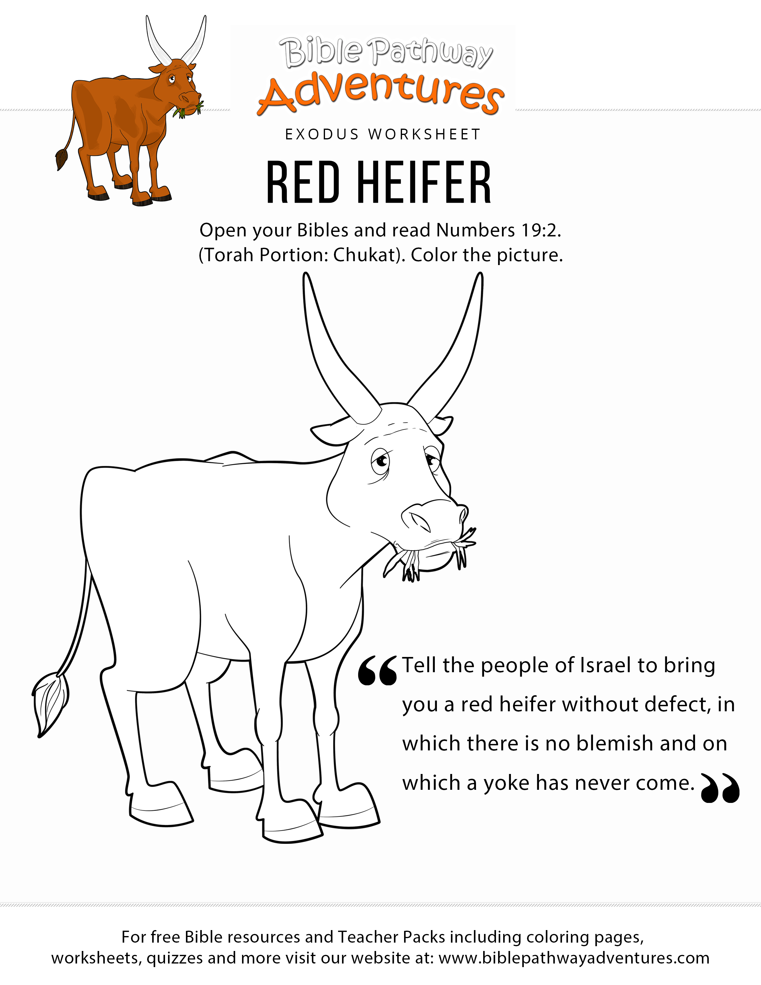 Red Heifer Coloring Page For Kids