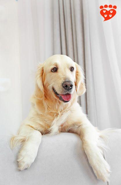 The Ultimate Dog Training Tip Dog Training Aggressive Dog Dog