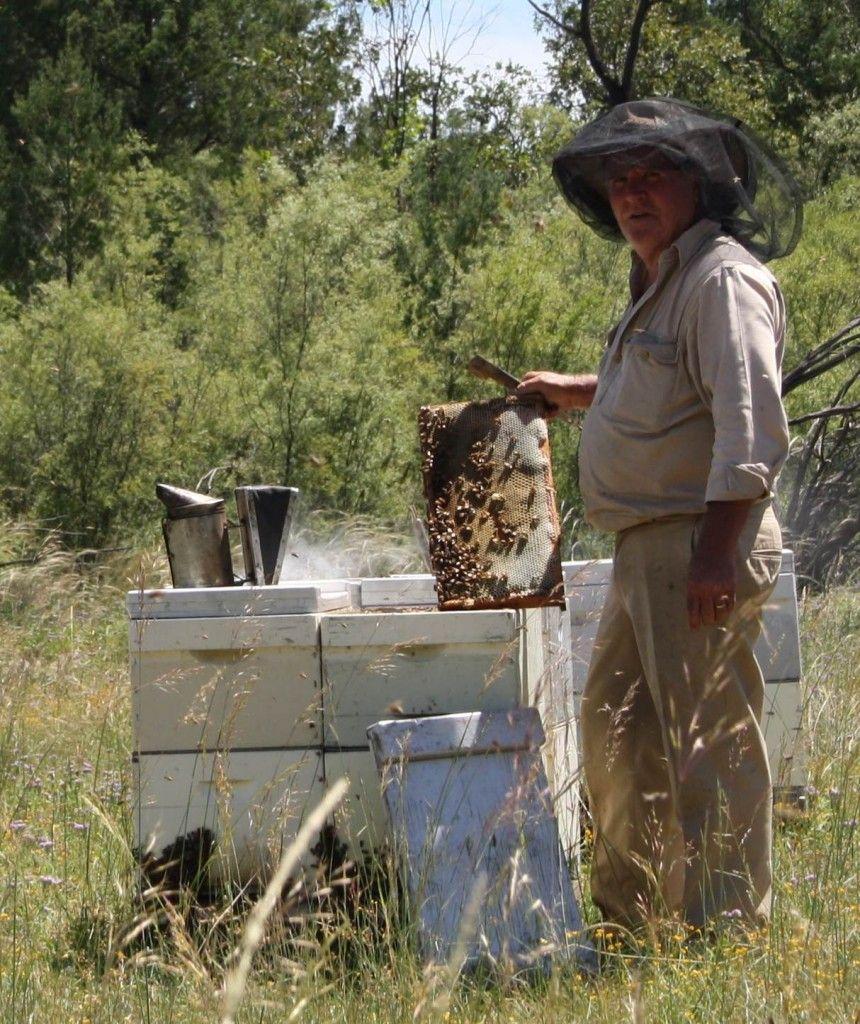 Australian beekeeping should be protected Bee, Bee