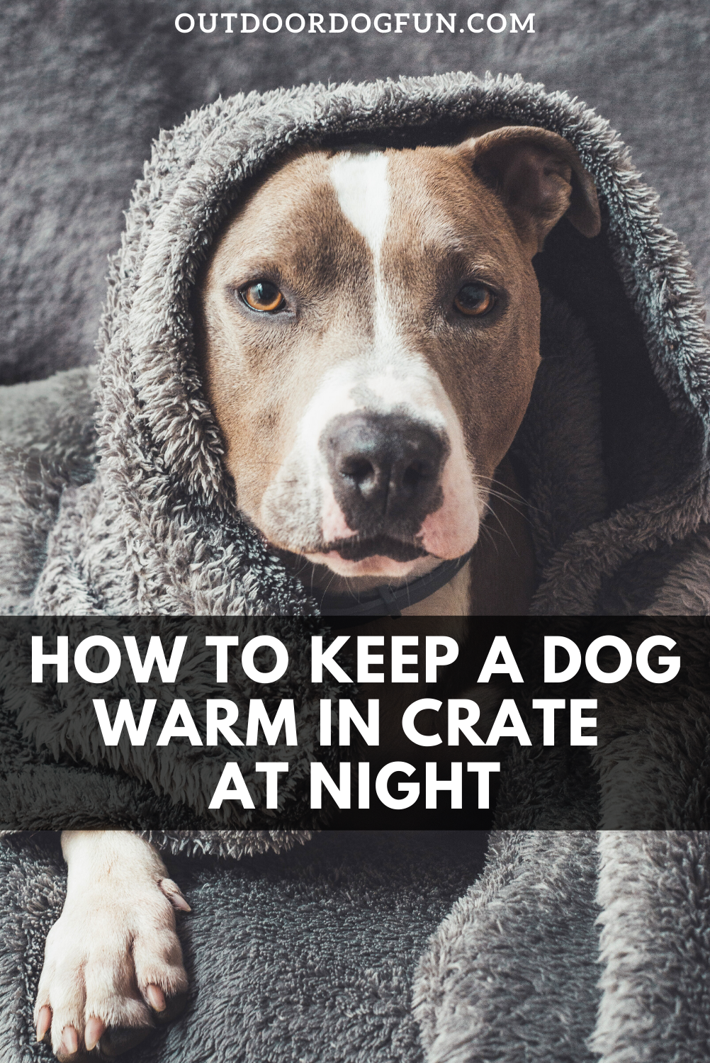 How To Keep A Dog Warm In Crate At Night Epic Guide Dog Cold Dogs Dog Care