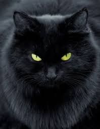 Image result for images of black cats