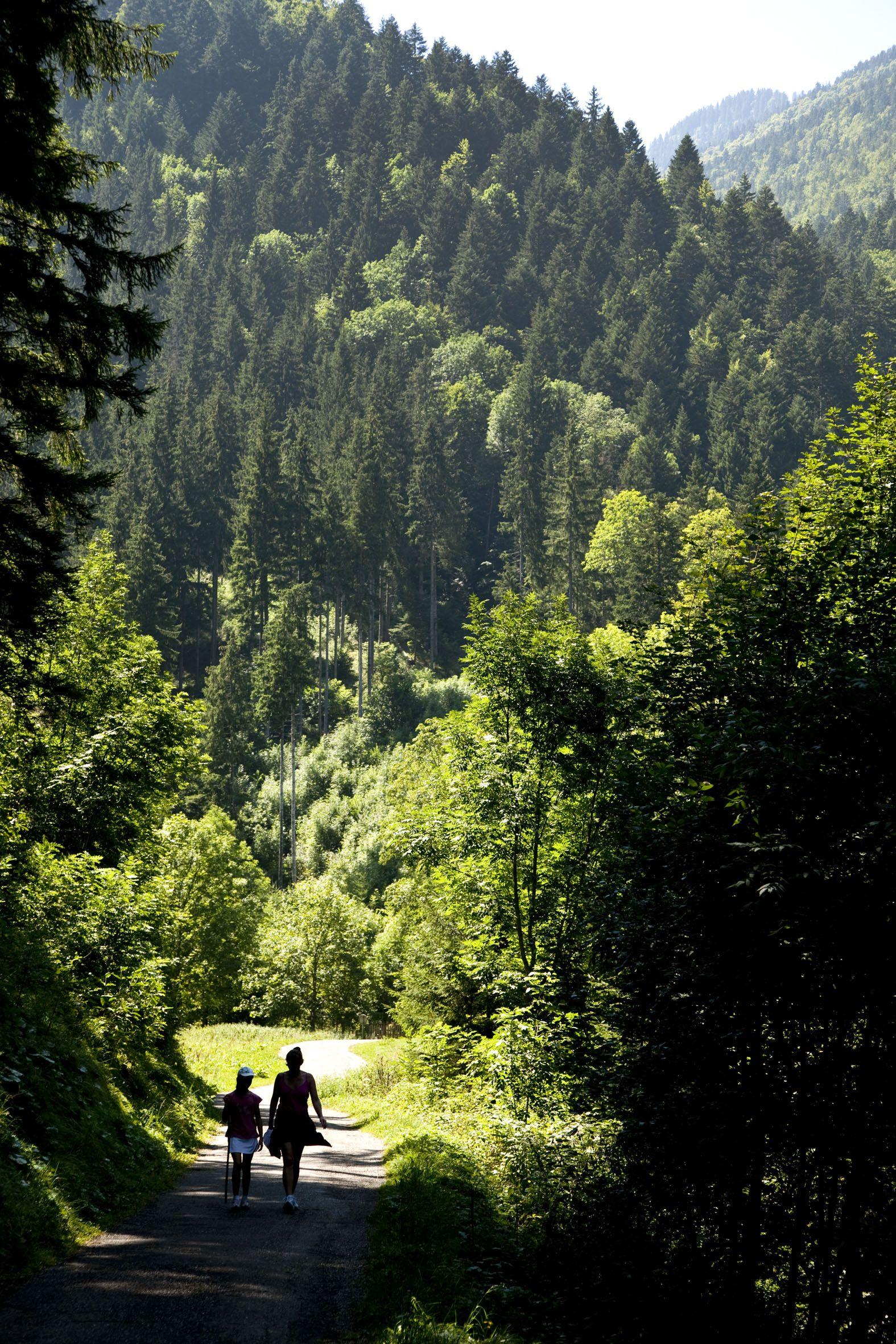 Les 10 Plus Beaux Parcs Naturels Régionaux De France Parc Naturel Parc Naturel Régional Beau Parc