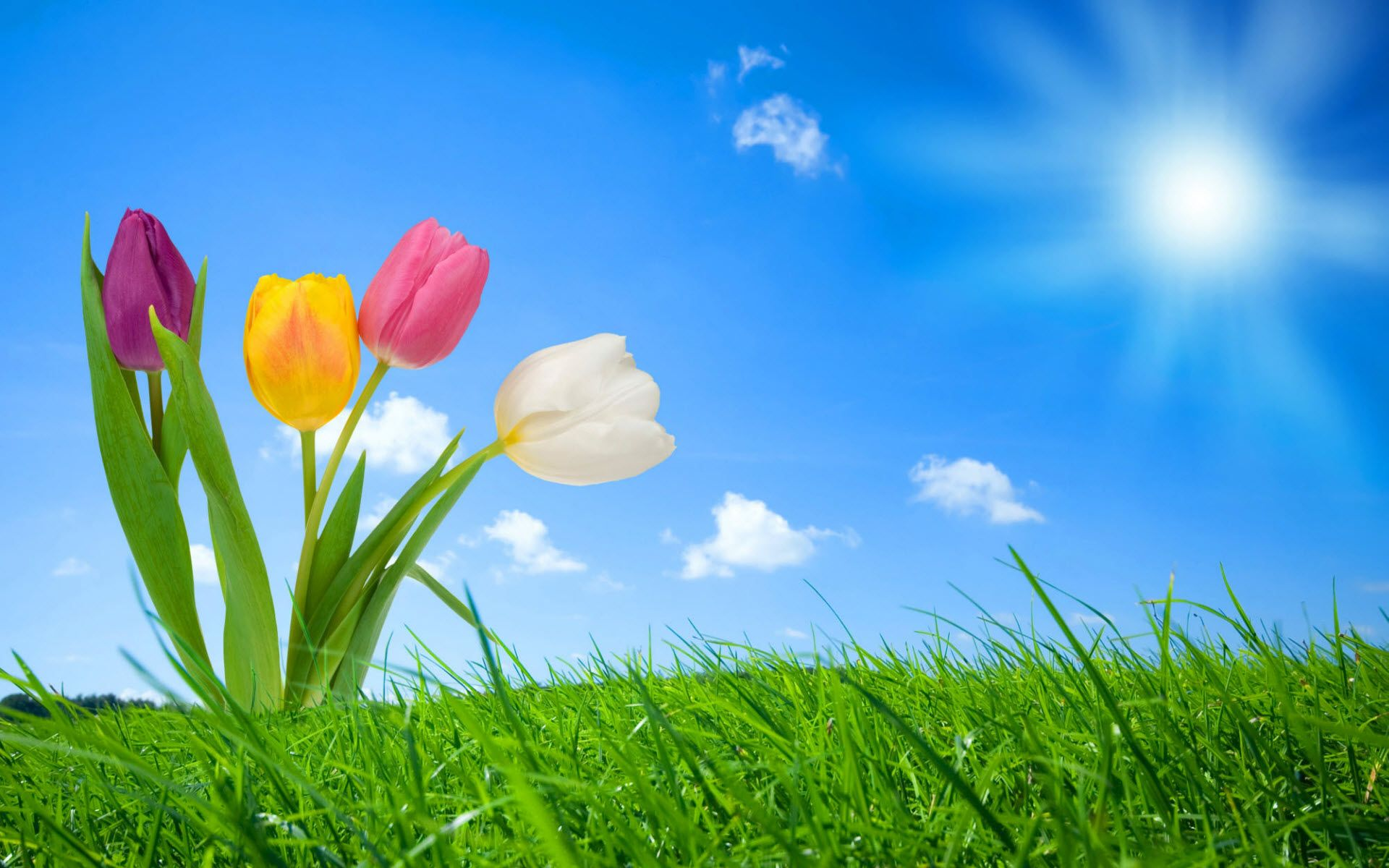 35 Beautiful Spring Pictures And Wallpapers: Free Spring Wallpaper Backgrounds