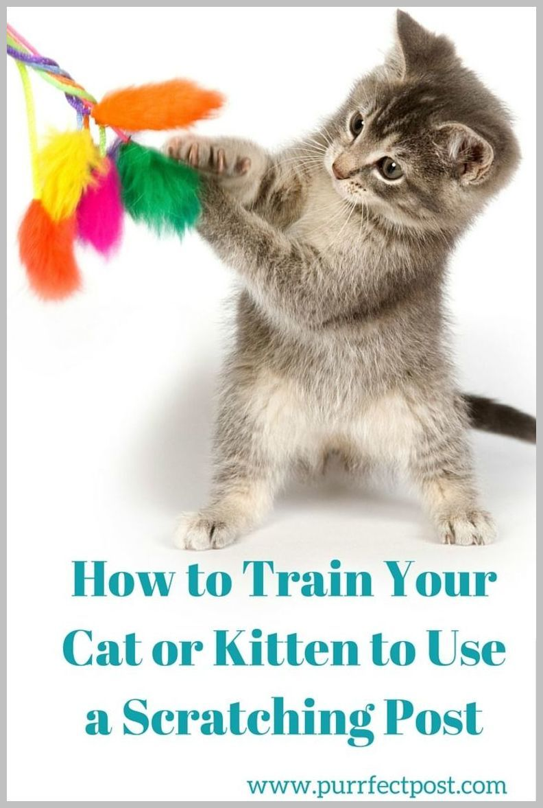 How To Ease Your Dog S Fear Of 4th Of July Fireworks Dog Tips Learn More By Visiting The Image Link Dogtips Cat Training Cat Care