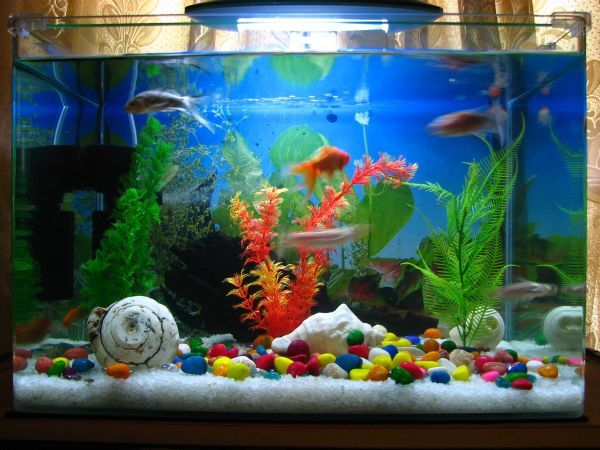 28 modern fish tanks that inspire relaxation modern fish for Fish tank house