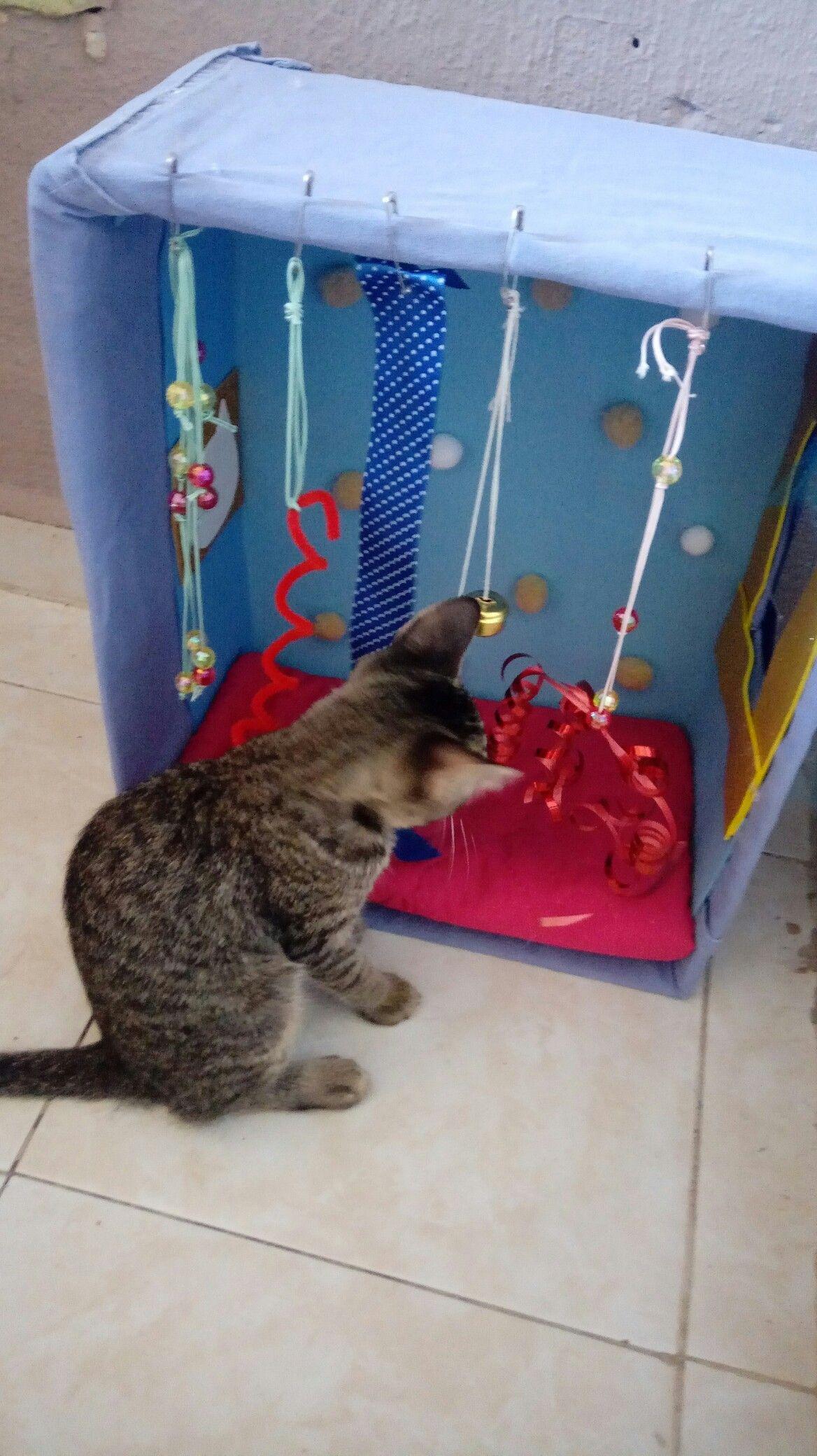 Pin By Azu Noe On Dlya Kota In 2020 Homemade Cat Toys Diy Cat Toys Cats Diy Projects