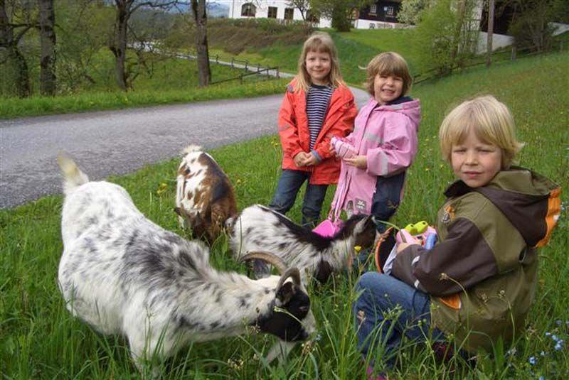 Beim Spaziergang mit unseren Ziegen ist Spaß und Abenteuer garantiert.  http://www.ponyhof-familienhotel.at