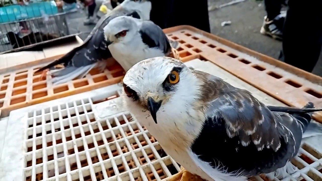 عالم الحيوان سسوق الغزل Animals Owl Bird