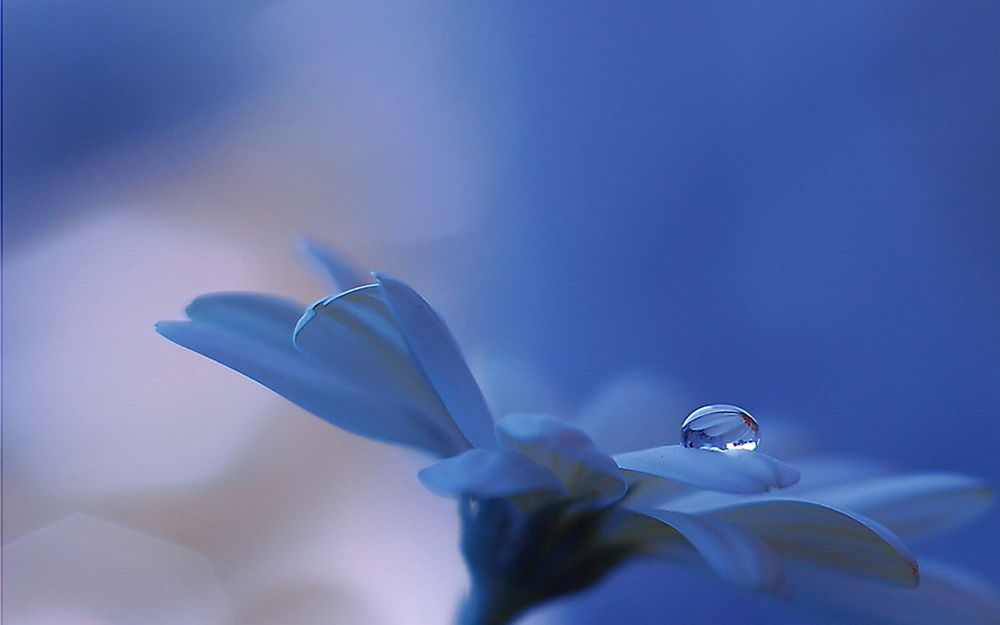 Beautiful and delicate work of the photographer Jay Nan 01