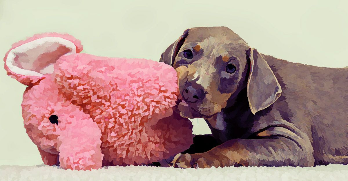how to soothe a teething puppy