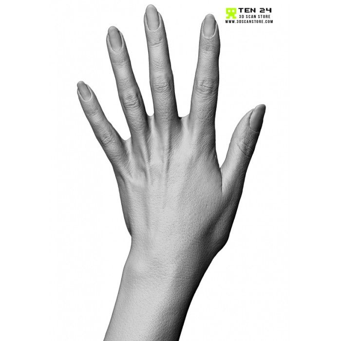 Female Hand 02 Fingers Straight | Finger, Anatomy and Anatomy reference