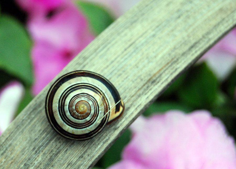 Spirals Everywhere