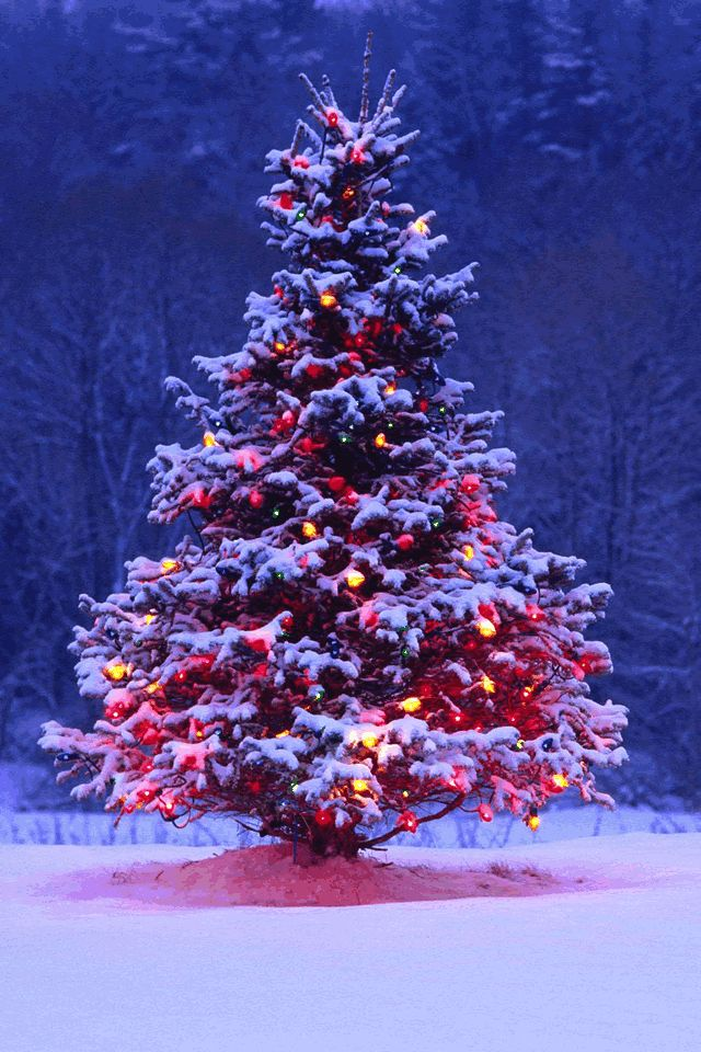 Outdoor Christmas Tree with lights and snow. Outdoor
