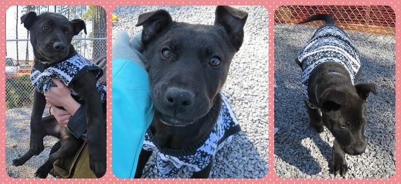 DAISY ~ Athens, GA HOLD EXPIRED Age: 4-6 months Breed: Lab mix Gender: Female