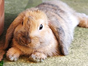 myhouserabbit.com  An informational website about owning rabbits as indoor pets.