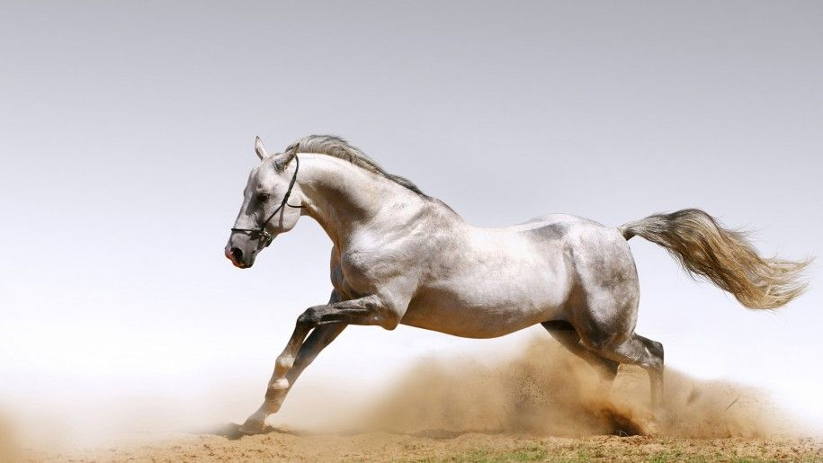 White Horse Racing Galloping Wallpaper Hd 3840x2160 Horse