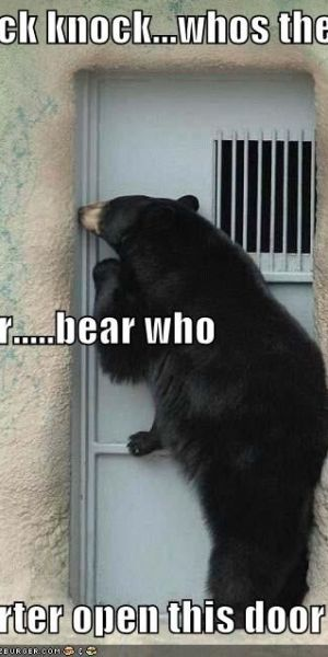 Whos Knocking Bear is Knocking How Can That Be -