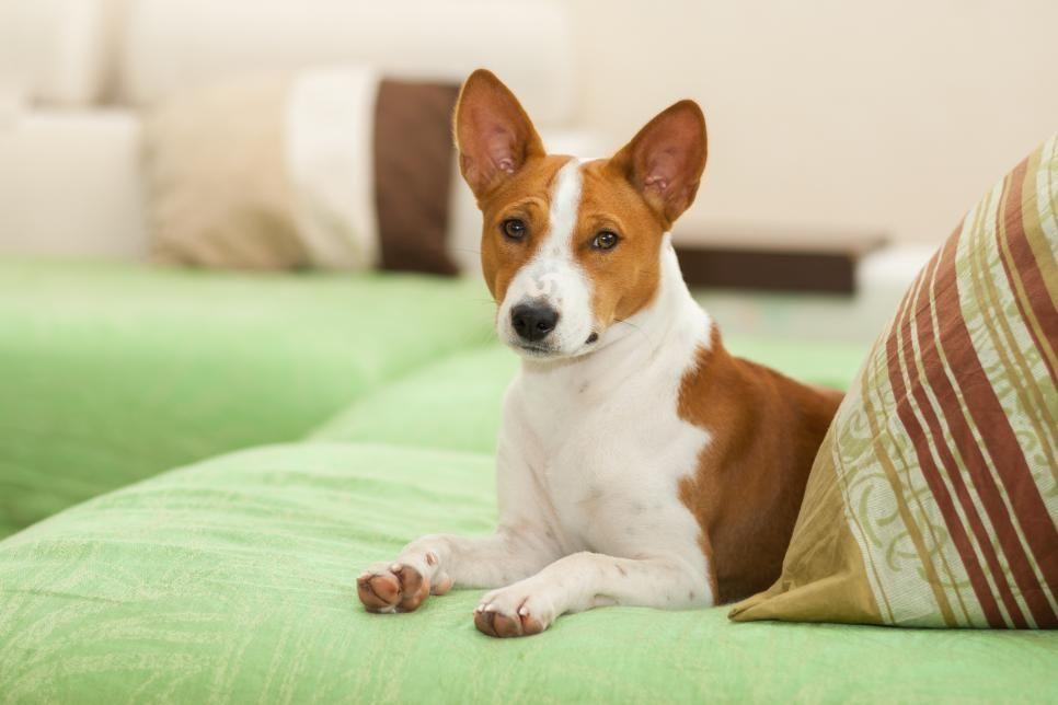 Best No Shed Dog Breeds Hgtv No Shed Dog Breeds Dog Breeds Your Dog