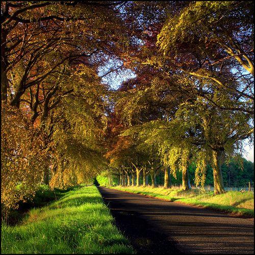 Copper Beech Avenue by angus clyne, via Flickr