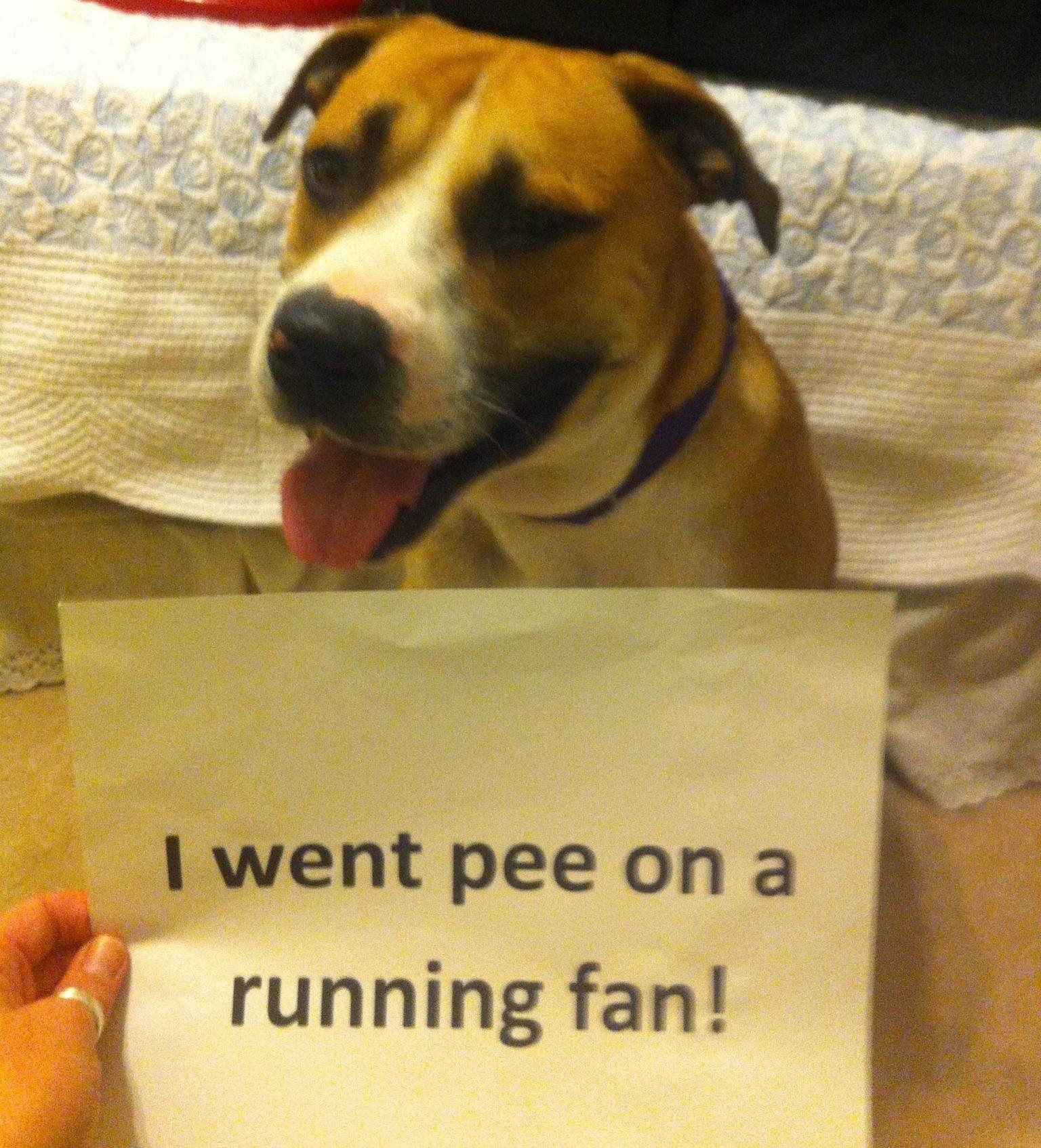 25 pictures of public dog shaming   Dogtime