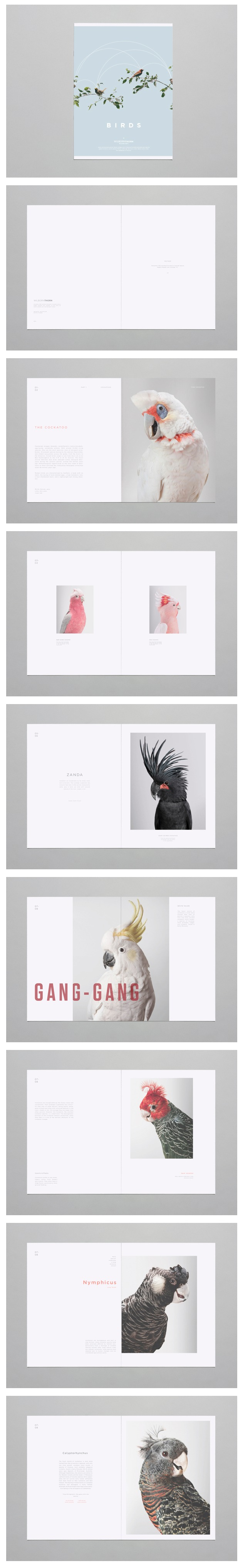 Brandon Nickerson - Birds