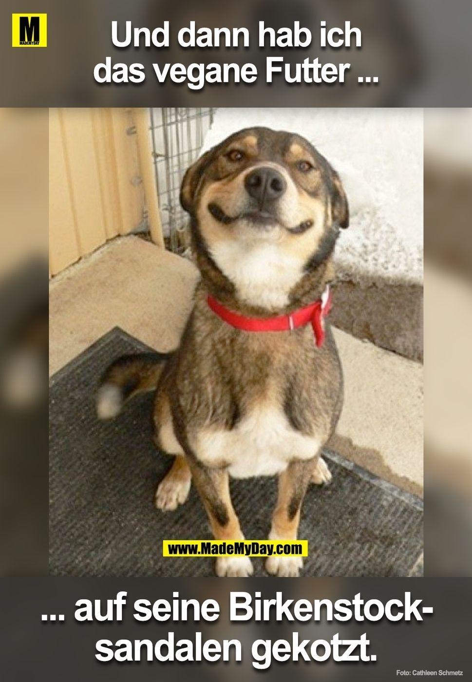 guter hund veganhumor guter hund  katzen lustige sprüche