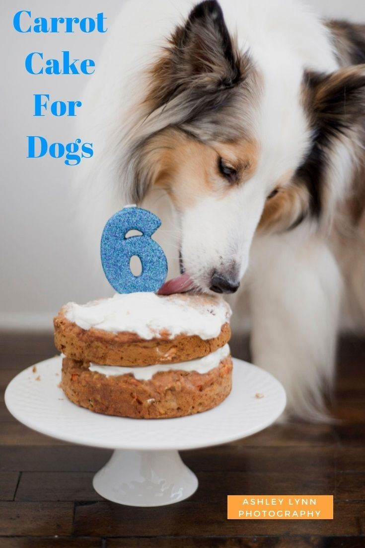 Celebrate a special dog's day with this carrot cake for dogs recipe from Ashley Lynn Photography, #Sheltie #dogtreats