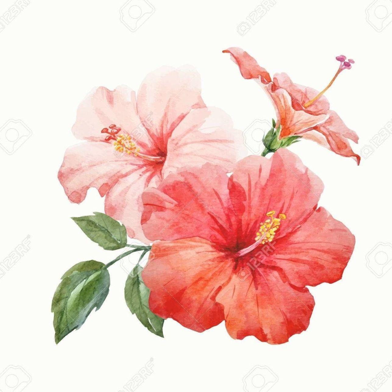 Watercolor Vector Tropical Hibiscus Flower Clip Art Libres De Droits Vecteurs Et Illustration Image In 2020 Hibiscus Drawing Hibiscus Flower Drawing Flower Drawing