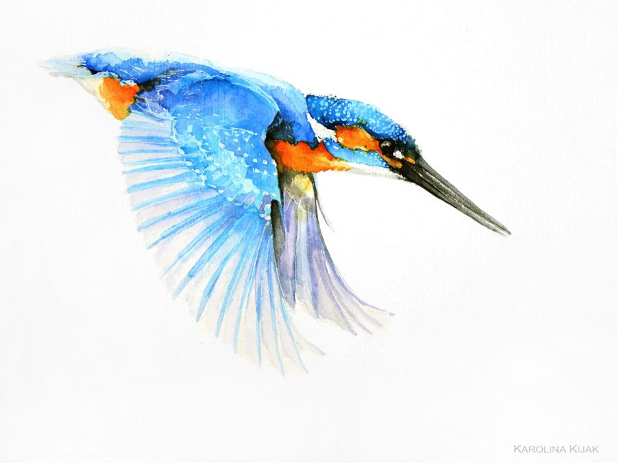 Kingfisher Watercolor By Kakiaart On DeviantArt Птицы - Man finally captures the perfect kingfisher photo after 6 years and 720000 attempts