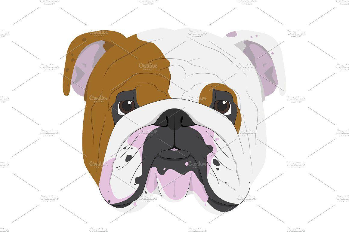 English Bulldog Vector Illustration Full Collection Save